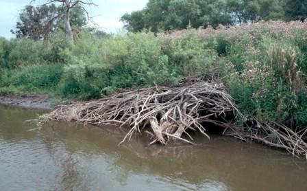 river otter den