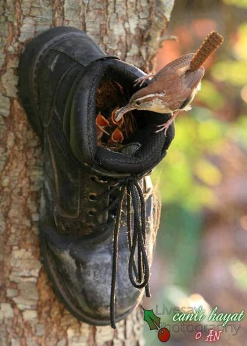 boot on tree